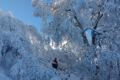 raquetas-de-nieve-asturias